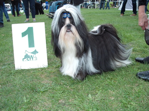 International Dog Show 29.09.2019