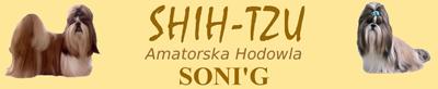 Soni'g Shih-Tzu kennel - Amatorska hodowla